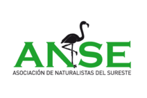 be green y anse